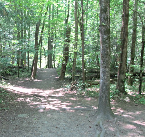 the smokies is a great place for a nature-hike