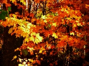 While creating your Schedule of Events the Fall is a perfect time to come to the Smokies and enjoy lovely colors and enjoy autumn festivities.