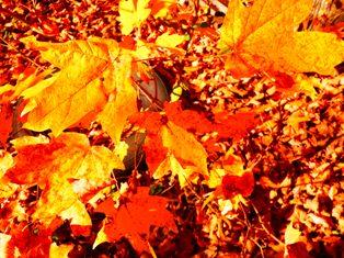 Activity Holidays Fall Foliage
