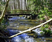 Enjoy an exquisite view from the Cataract Falls Bridge