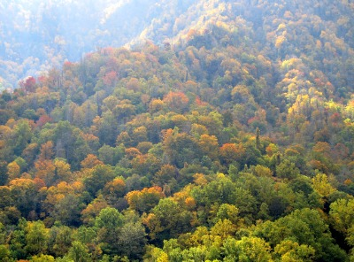 Clingmans Dome fall colors create the splendid colors in God's coloring book!