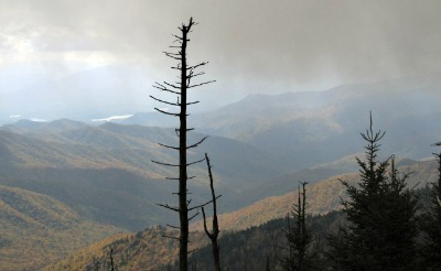 there are trees in clingmans-dome that are dying