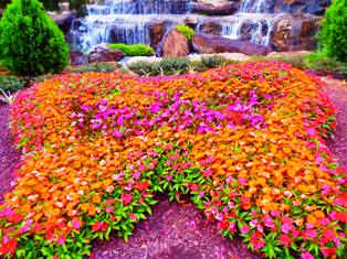 This Dollywood Splash Country Butterfly is actually a flower garden.
