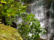 At Fern Branch Falls bushes are what make the falls so lovely