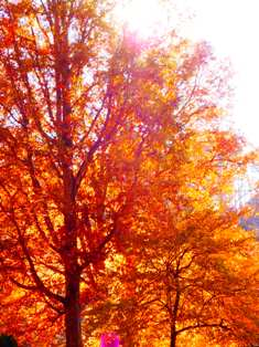 As we forecast weather trees in fall turn lovely colors!