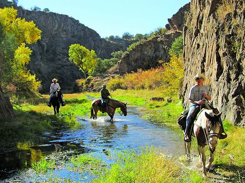 Enjoy An Exciting Ride As You Go Through A Real Adventure At Gold Rush Riding Stables.