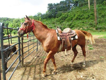 Enjoy Heritage Carriage Rides horseback riding at Goldrush Riding Stables.