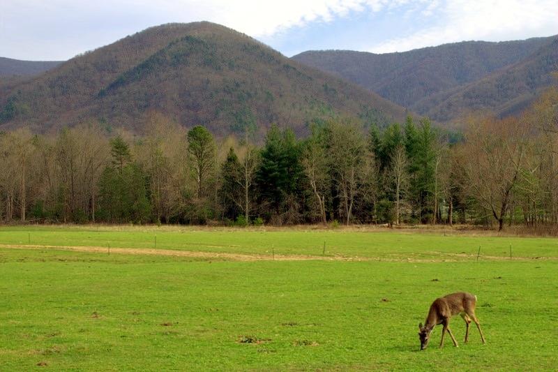 A Malia Deer Cove Photo