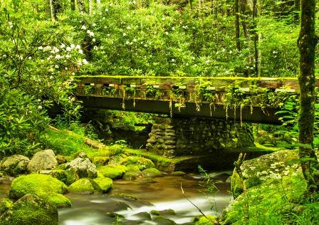 This beautiful National Register Stream is located in Gatlinburg's Roaring Fork!