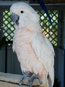 This Parrot Mountain White Bird is really enjoying meeting with visitors.