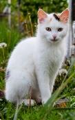 A pet boarding cat is taken care of properly.