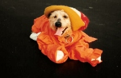 Pet Halloween Costumes Full Length Are Very Fashionable