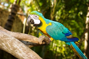 A most beautiful Pigeon Forge Attraction Parrot Mountain is a spiritual place to enjoy in the mountains.