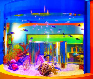 This Ripley's Aquarium Tank is Filled With Exotic Fish!