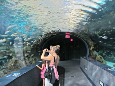 Ripley's Aquarium Overhead Tank Will Make You Feel As Though Your Swimming With The Fish!