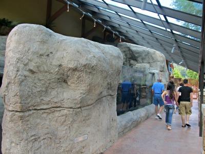you are free to roam around ripleys-aquarium penguin den