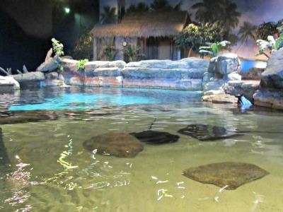 touch a stingray in ripleys-aquarium stingray bay