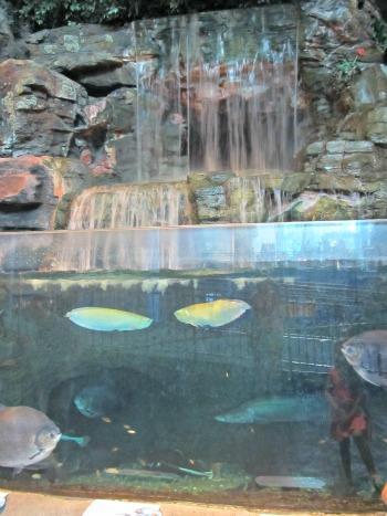 waterfall at ripleys-aquarium