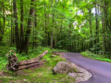 Roaring Fork Road is a winding road with lots of curves.