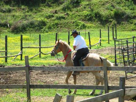 The Cowboy Riding This Horse Does His Riding At Gold Rush Stables in Pigeon Forge, TN!