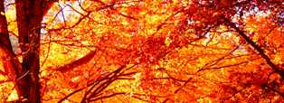 To forecast weather in the fall, one must include the lovely autumn colors!