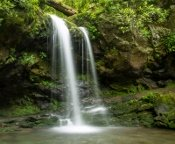 Grotto Falls is one of the most lovely falls in the Smoky Mountains