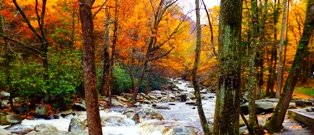 Index Great Smoky Mountains is the perfect place to plan the perfect vacation!