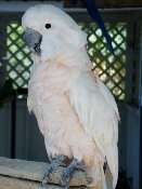 This Parrot Mountain White Bird Is Waiting For An Exciting Visit From You!
