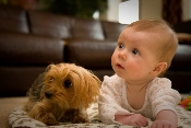 Pet Adoption creates friendships and close bonds.