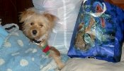 Find everything you need like this pet-supply-store dog did.